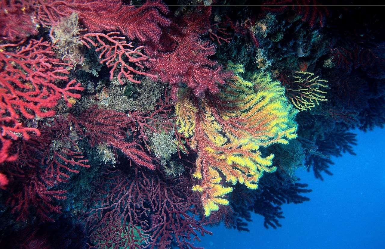Gorgonian en el mar de Nosy Be