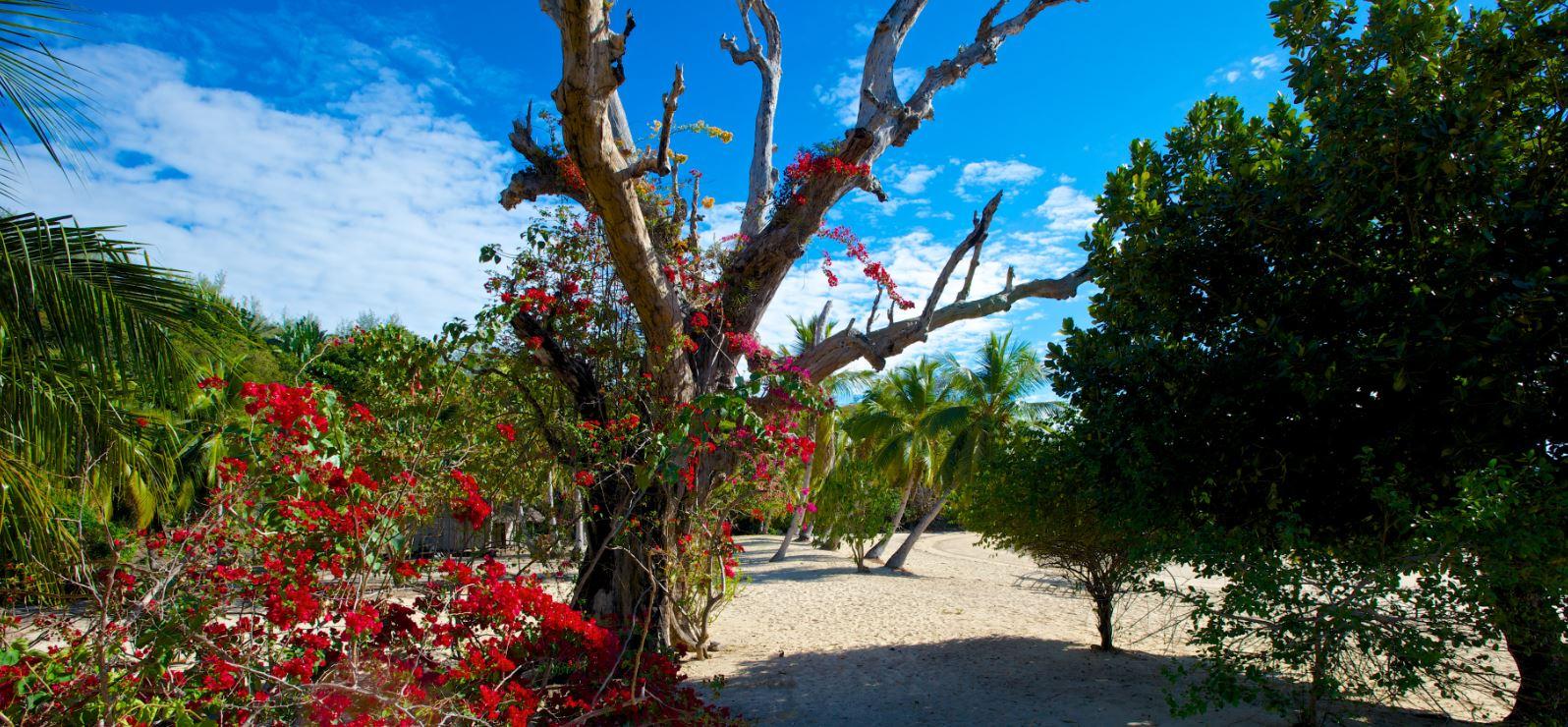 Fleurs tropicales à la plage de Nosy, Sakatia